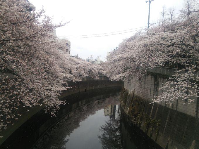 江戸川橋駅下車、橋からの眺め