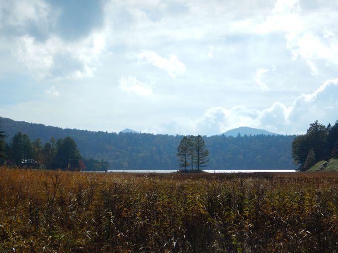 尾瀬沼の三本松から大江湿原経由で沼山峠へ