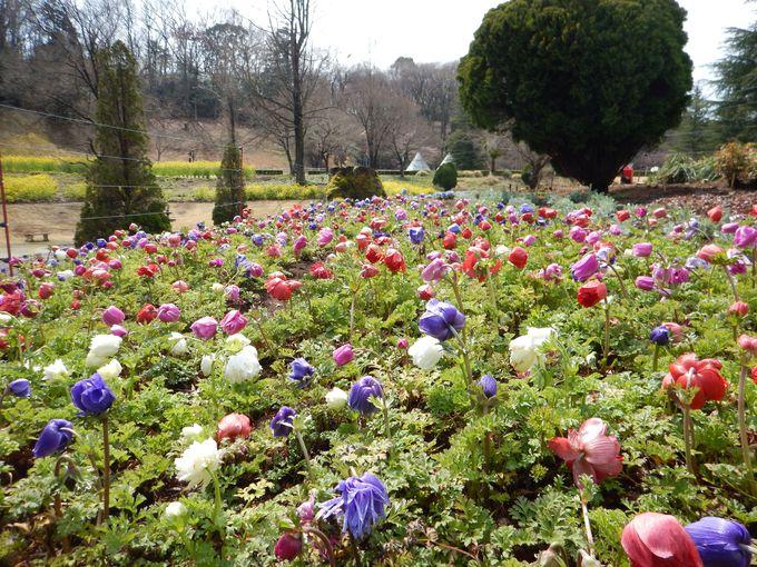 どの季節も美しい!花であふれるテーマパーク
