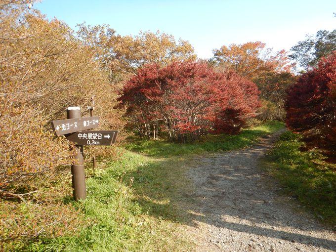 ツツジの名所八幡自然研究路の周遊コースを