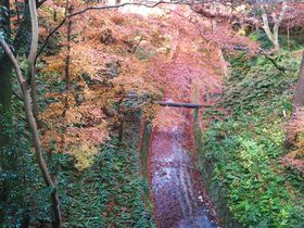 紅葉で人気の京都・東福寺!通天橋以外にも注目、渓谷・洗玉澗に架かる三名橋の絶景|京都府|トラベルjp<たびねす>
