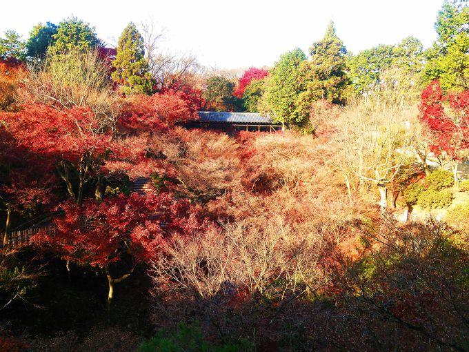 伏見稲荷大社からJR2分+徒歩10分:東福寺