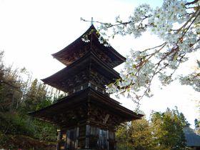 仏都会津を感じる法用寺で会津五桜「虎の尾桜」と木造三重塔の共演|福島県|トラベルjp<たびねす>