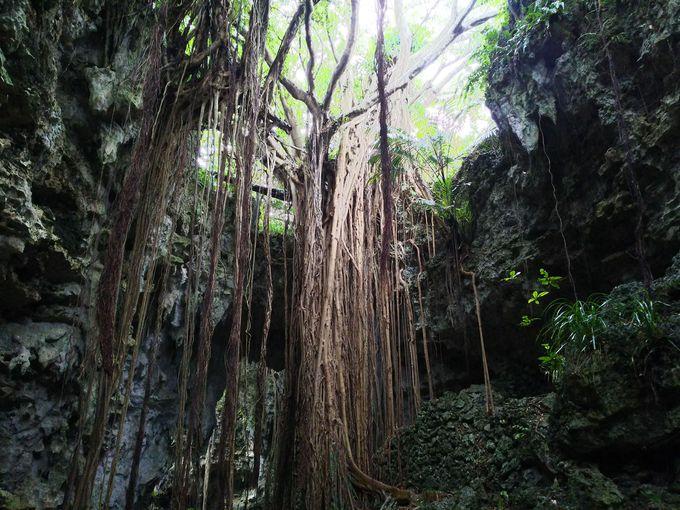 大岩、トンネルを越えると「大主ガジュマル」の絶景!