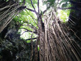 沖縄のパワースポット「ガンガラーの谷」で古代からの歴史と大自然を学ぼう