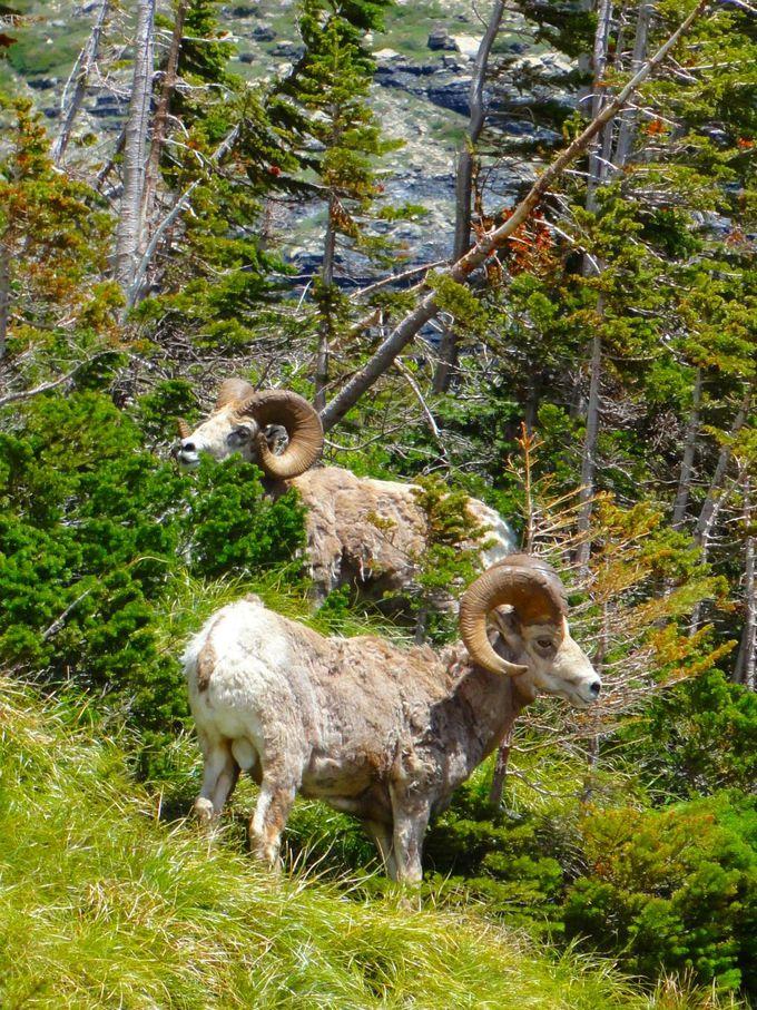 グレイシャー国立公園の西側からアプローチ