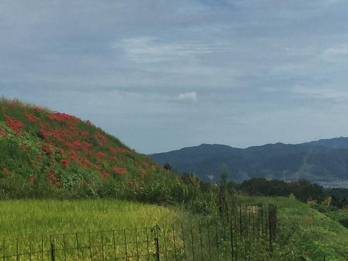 にほんの里100選 穂谷周辺には見所がたくさんあります。