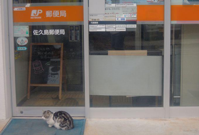 佐久島は猫好きに人気の動物写真家・岩合光昭さんも撮影した、猫の島!