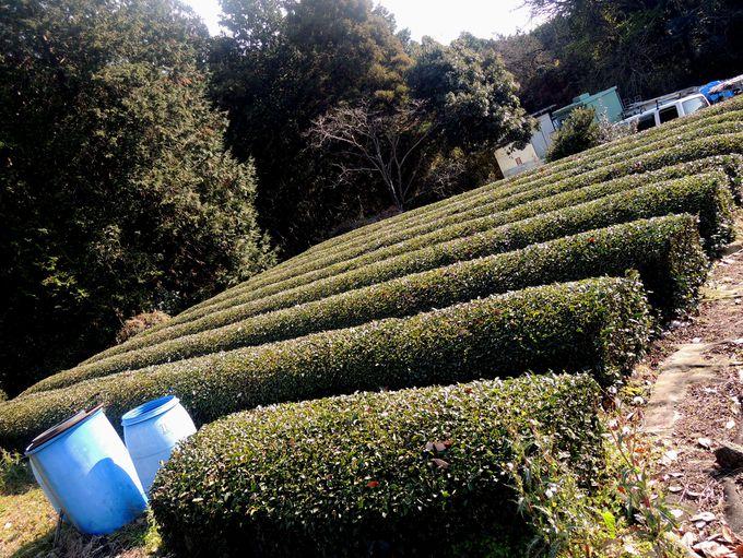 謎の「いぼ神さん」に茶畑も!周辺をぶらり駅さんぽ