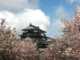 これぞ日本の絶景!桜シーズンの「松山城」から目が離せない