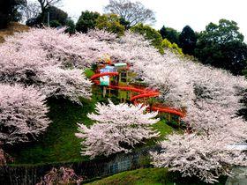 桜の中を滑り台がスイ~!今治「瓦のふるさと公園 かわら館」で春さんぽ|愛媛県|トラベルjp<たびねす>