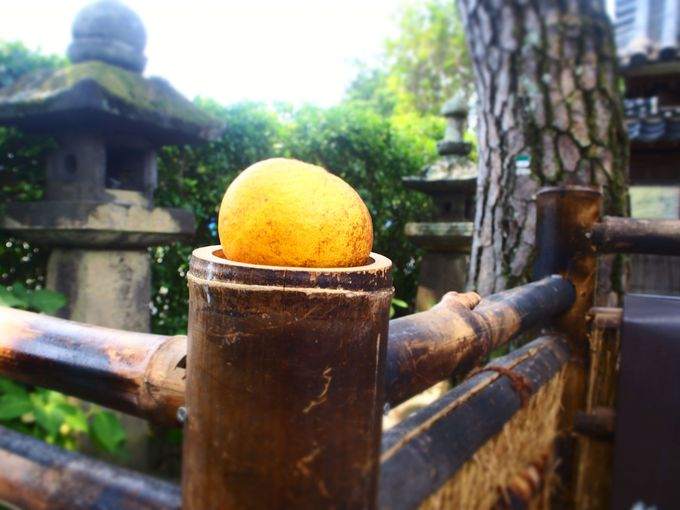 鳥居をくぐっていざ円政寺へ!