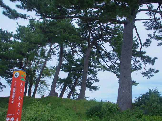 有名な島をめぐりながら九十九島を散策しよう