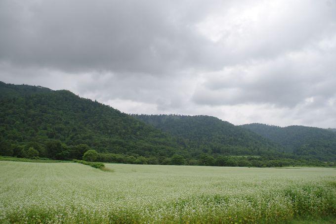 国道40号線沿いを真っ白に染める『蕎麦畑』