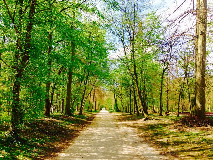 新鮮な空気を深呼吸!遊歩道をのんびりお散歩
