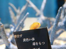 生きているミュージアム!「ニフレル」は五感で楽しめる大阪の新スポット