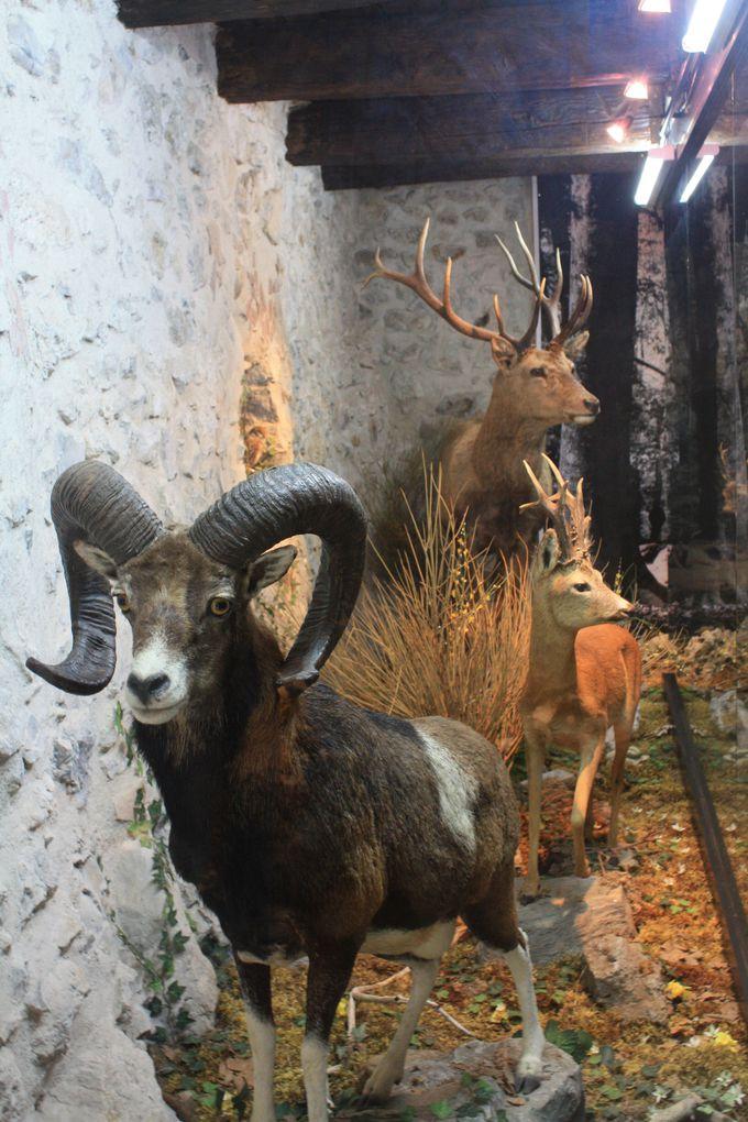 Il Nibbio自然博物館