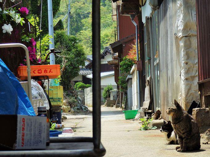 猫がくつろぐのどかな町をぶらぶら散策