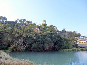 和歌山県屈指のミステリースポット!?沼地を漂う「浮島の森」|和歌山県|トラベルjp<たびねす>