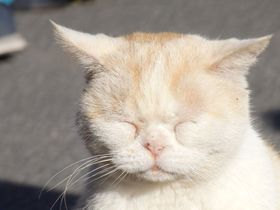 数十匹の猫が暮らす寺。福井県・越前市「御誕生寺」|福井県|トラベルjp<たびねす>