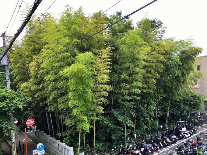 江戸時代から記録の残る小さな藪