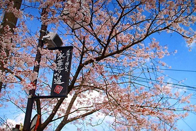女子旅するなら熊本県「阿蘇神社門前町・水基巡りの道」へGO!