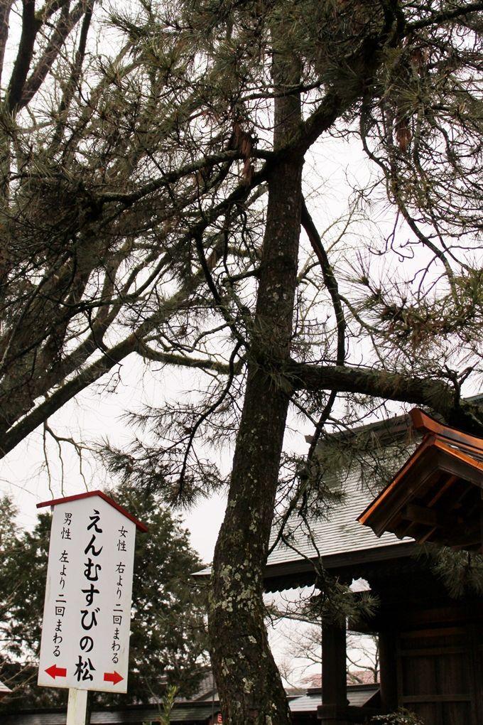 縁結びの霊験あらたかなパワースポット「阿蘇神社・高砂の松」