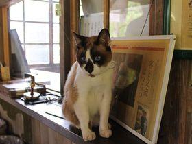 観光大使「たぬき猫にゃん太郎」に会える!築110年のレトロな「JR嘉例川駅」(鹿児島)|鹿児島県|トラベルjp<たびねす>