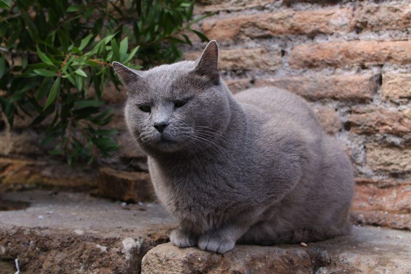 超フォトジェニック!猫のサンクチュアリ