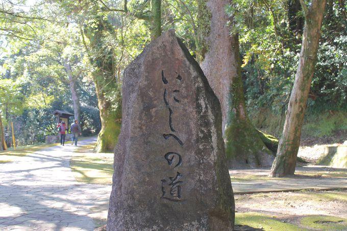 「竹田神社」癒しの杜は緑でいっぱい