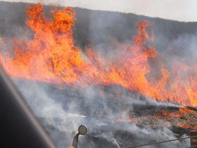 早春を告げる「阿蘇の野焼き」―丘を焼き尽くす炎がすごい!|熊本県|トラベルjp<たびねす>