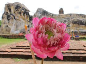 アユタヤ遺跡で楽々観光「ワット・ロカヤスタ」巨大涅槃仏は駐車場から30秒!
