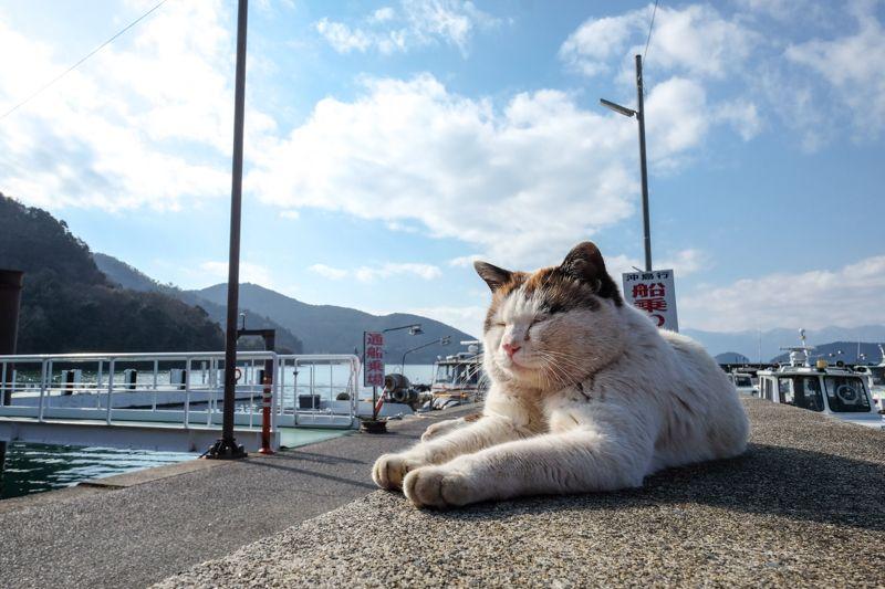 港で出迎えてくれる名物猫