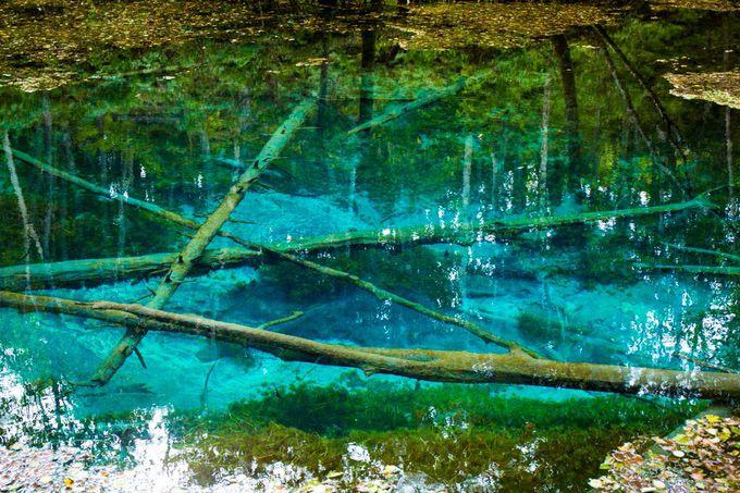 神秘の色!神秘の透明度!神の子池