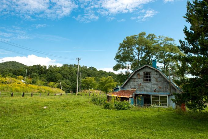 炭鉱住宅跡は、黄色と緑の草原広場