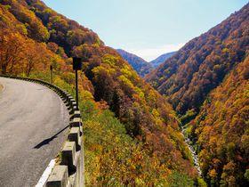 紅葉の超穴場!富山の秘境・有峰林道で大自然満喫ドライブ!|富山県|トラベルjp<たびねす>