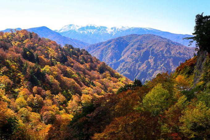 白山の絶景が見える「とがの木台」からの眺望