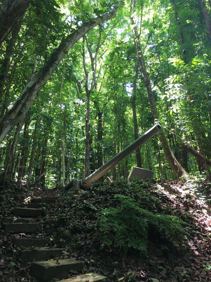 ジャングルに取り残された史跡「ピティガンズ」