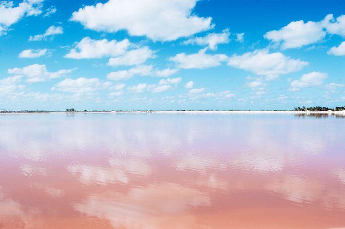 加工なし!自然が魅せるピンク色に酔いしれて