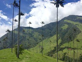 コロンビア名物!世界ー高いヤシの木が生える「ココラ渓谷」