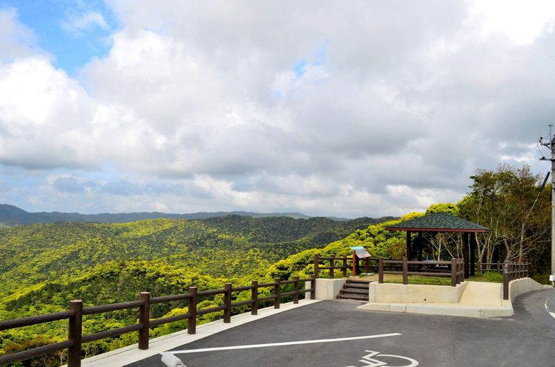 新緑の美しい奄美大島!ドライブで巡る絶景スポット