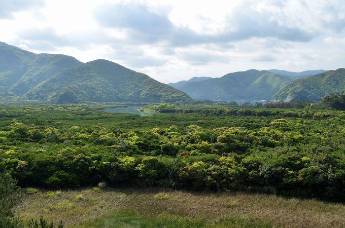 10.マングローブ原生林