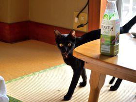 可愛い猫がお出迎え!伊豆・宇佐美温泉「海風荘」猫と温泉に癒されよう!|静岡県|トラベルjp<たびねす>