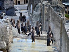 中学生以下無料!都内一安い「葛西臨海水族館」はペンギン天国でもあった!|東京都|トラベルjp<たびねす>
