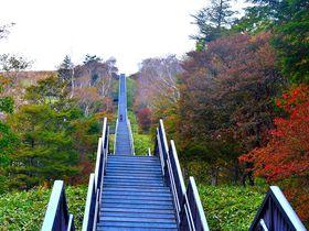 空へと続く一直線の1445段!日光・キスゲ平「天空回廊」|栃木県|トラベルjp<たびねす>