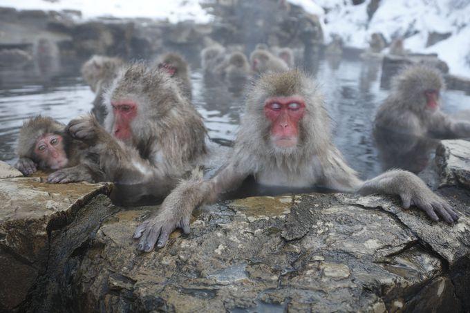 猿が入る温泉にはヒト専用のもあった!長野・地獄谷温泉「後楽館」