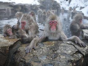 猿が入る温泉にはヒト専用のもあった!長野・地獄谷温泉「後楽館」|長野県|トラベルjp<たびねす>