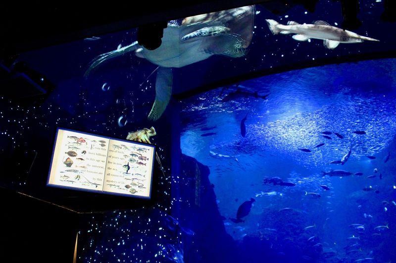 神秘的な夜の海が広がる!新江ノ島水族館「ナイトワンダーアクアリウム2017」