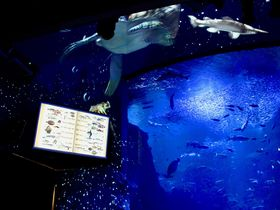 神秘的な夜の海が広がる!新江ノ島水族館「ナイトワンダーアクアリウム2017」|神奈川県|トラベルjp<たびねす>