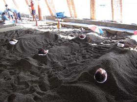 鹿児島県指宿温泉の「砂むし温泉」で大地のエネルギーを吸収しよう|鹿児島県|トラベルjp<たびねす>